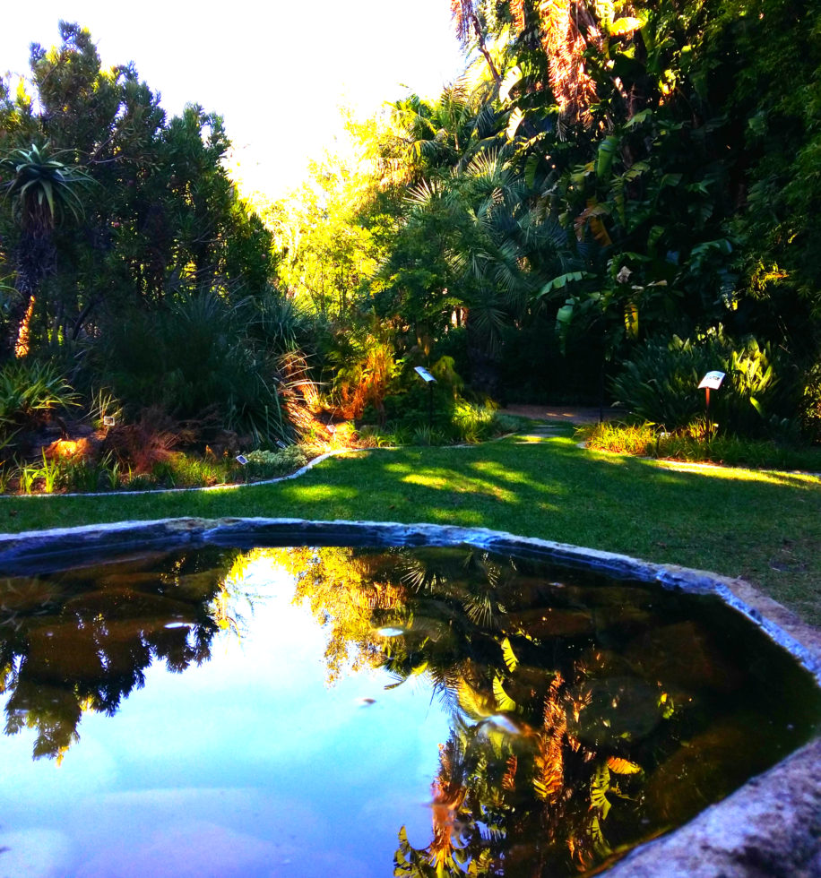 stellenbosch botanical gardens water feature