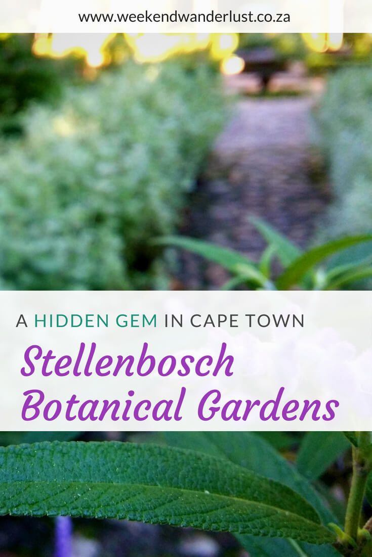 stellenbosch has so many hidden gems, but my favourite by far is the stunning botanical gardens nestled in the heart of the town itself. it's such a magical place to visit...
